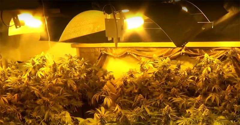 Lopott árammal termesztettek drogot
