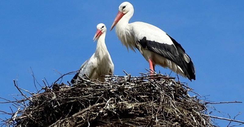 4200 fészektartó várja a gólyapárokat