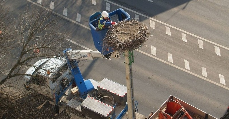 Már közel 50 000 középfeszültségű oszlop vált madárbaráttá