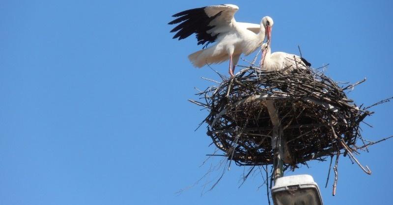 Tavaszig tehetők biztonságossá a villanyoszlopokon lévő gólyafészkek